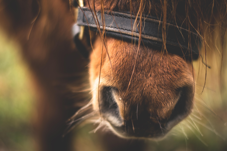 Neus van paard
