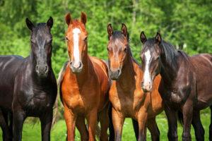 Groep paarden
